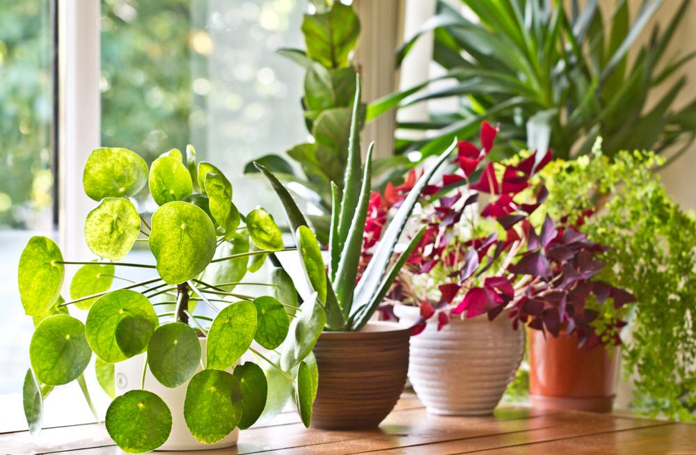 renovations: plants