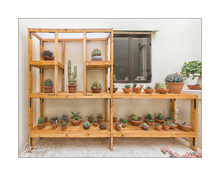 Cacti stand 3