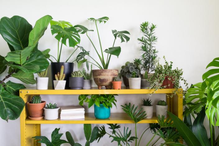 indoor plants, yellow cabinet